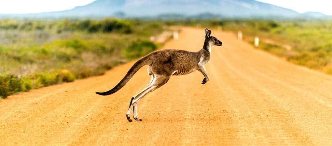 Australia Day Public Holiday 2020